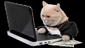 catwebdesigner